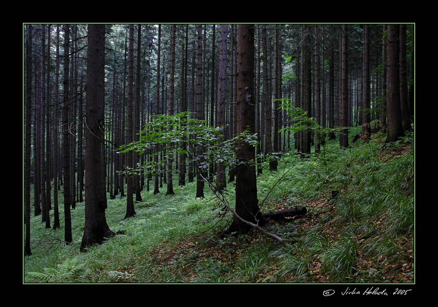 Jirka holada lesní scenérie
