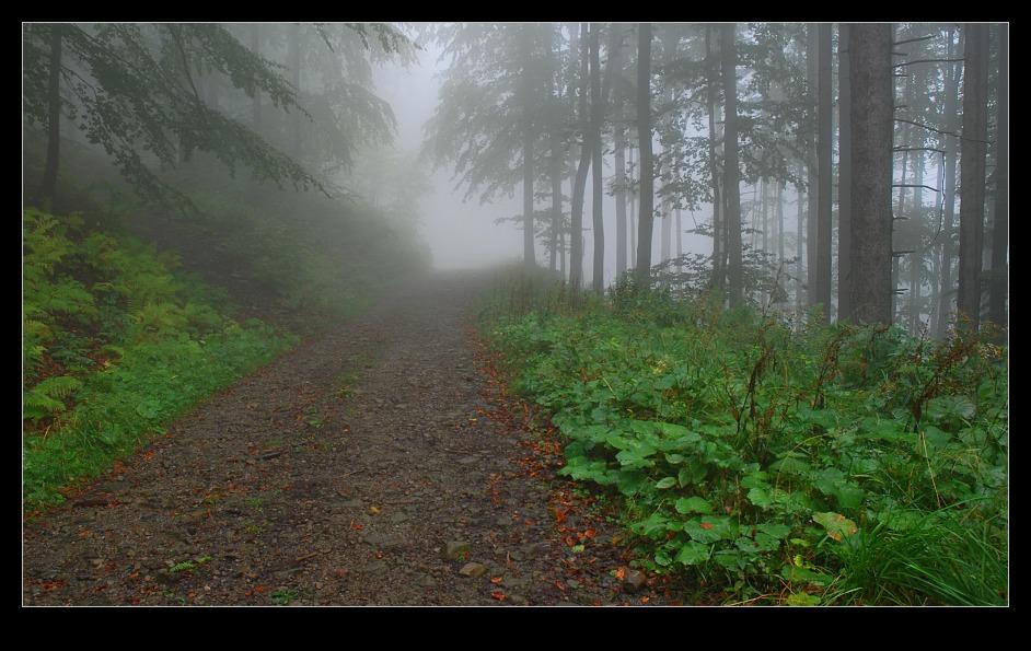 Alena kabotová : ráno v lese